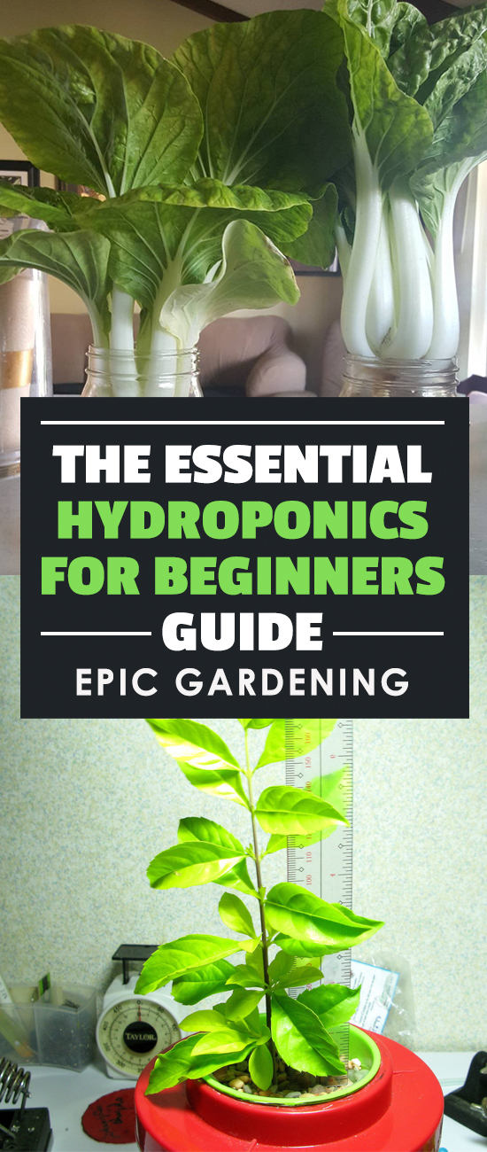 Learn the science behind hydroponics and how to build your own homemade hydroponic systems with household materials!