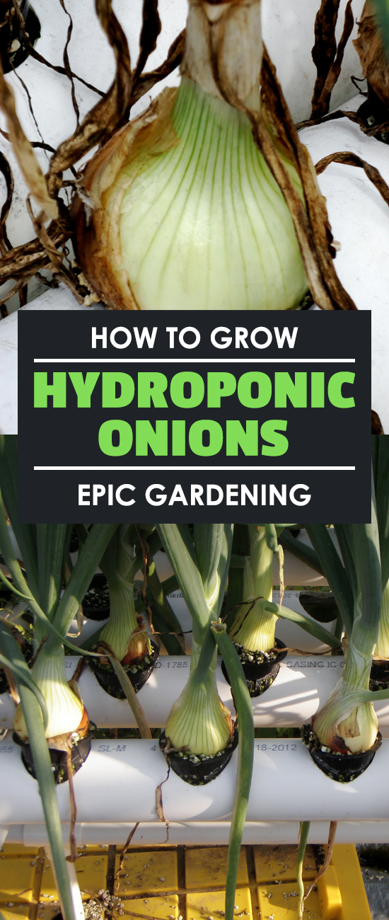 Learn how to grow hydroponic onions in this hydroponic root crop experiment. I break it down and you\'ll be able to follow along as I go!