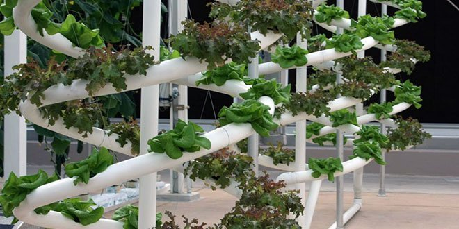 Hydroponics vs  Soil: 7 Reasons Hydroponics Wins | Epic