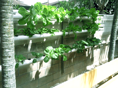 Hydroponics Saves Space