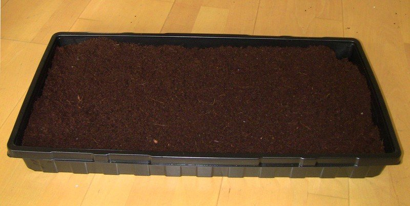 Microgreens Trays