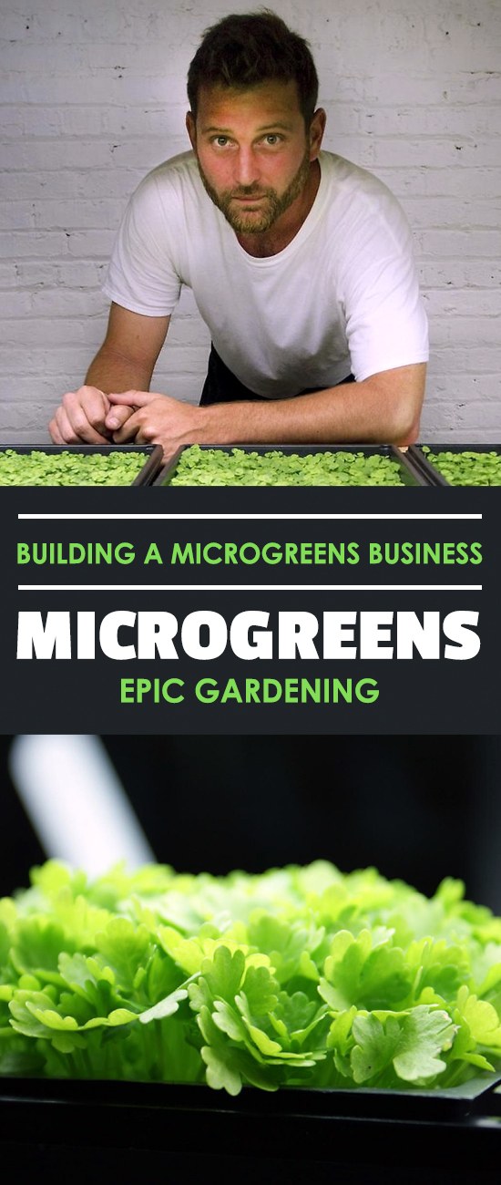 Learn how I started a microgreens business in my garage on a total whim. It's not smoke and mirrors...just solid, practical advice for starting out!