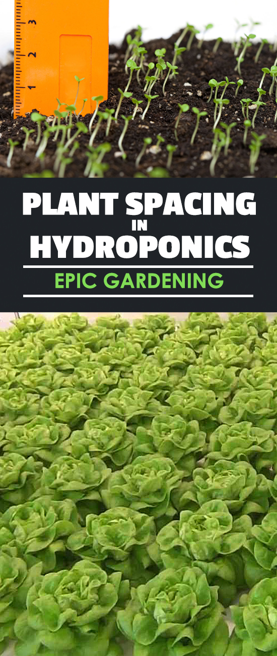 What are the differences in plant spacing in hydroponics vs. soil gardening? A reader recently emailed me this question and I had to write a post!