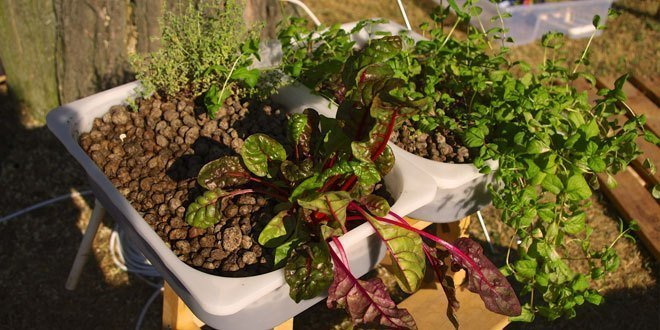 What to Know about Hydroponic Nutrient Solutions | Epic