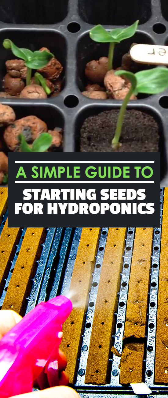 Starting seeds for hydroponics doesn't have to be difficult. In fact, it's really easy! Learn how to do it in 10 minutes with this Epic Gardening tutorial!