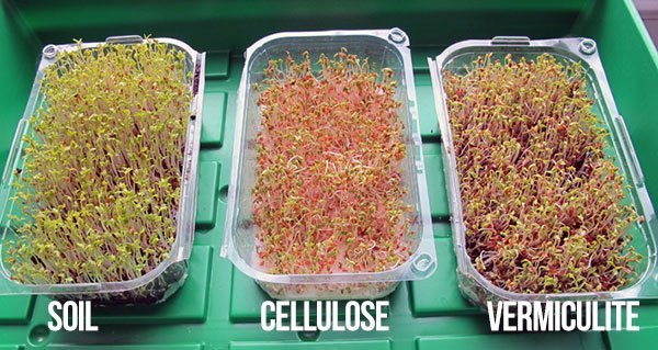 Best Growing Medium For Microgreens Of Is It Smart To Grow Microgreens Without Soil