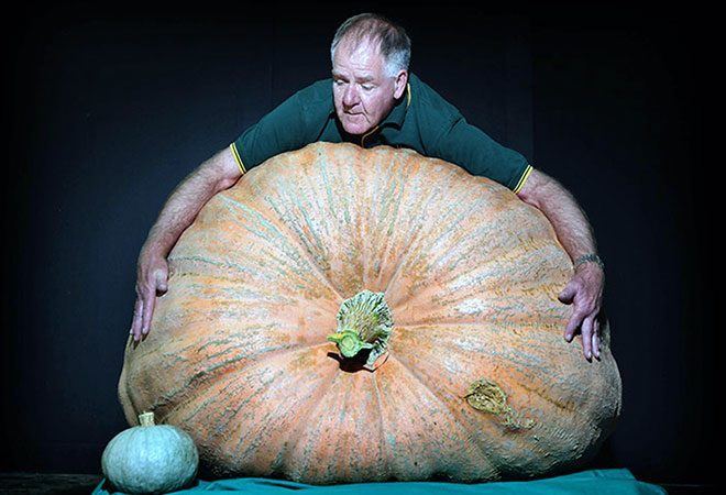 giant-pumpkin-two