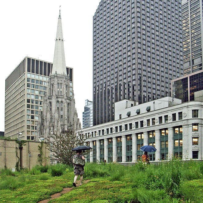 Green Roof in Washington