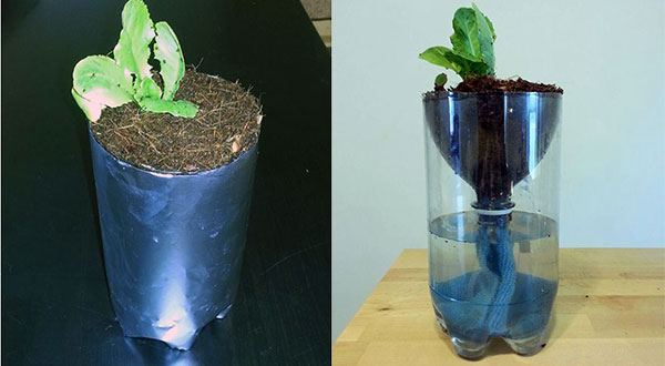 Hydroponics for Kids: Build a 2 Liter Bottle Garden