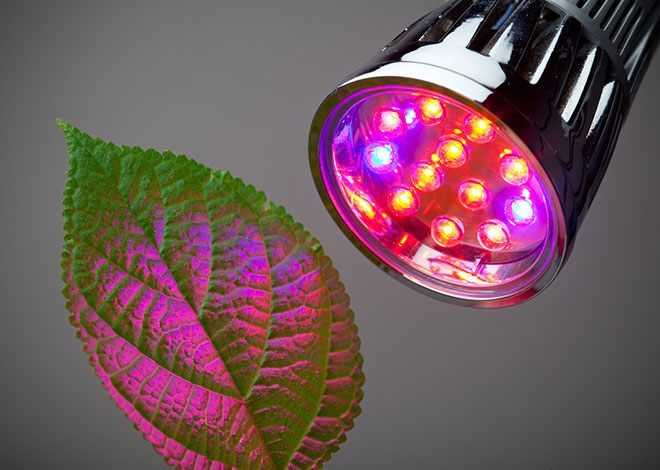 LED-lighting-for-Hydroponics