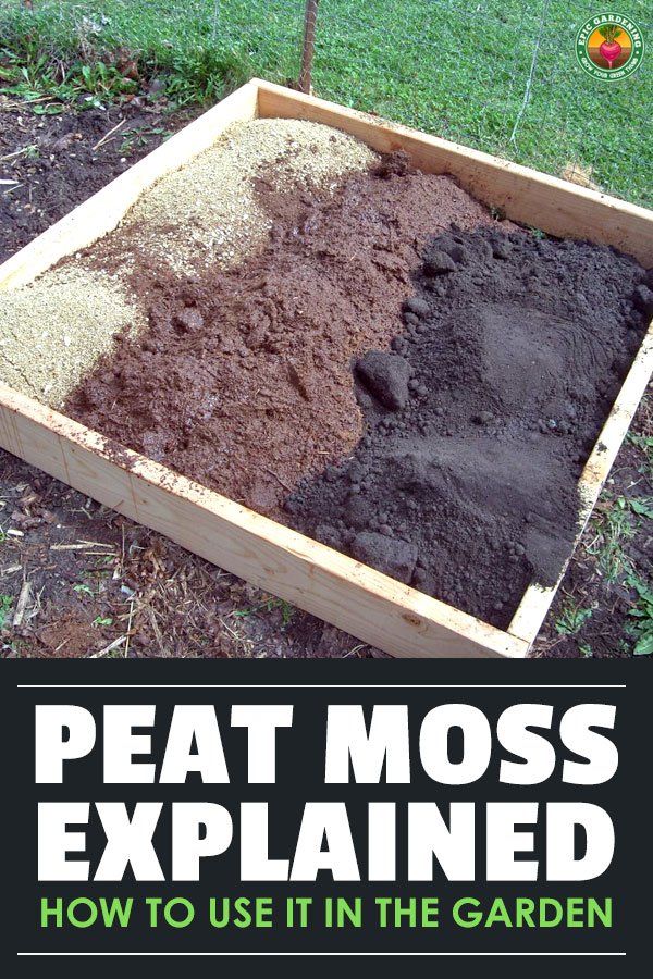 Sphagnum peat moss is a controversial soil additive for your garden. Learn how to use peat moss, where to buy it, and if it's worth it!