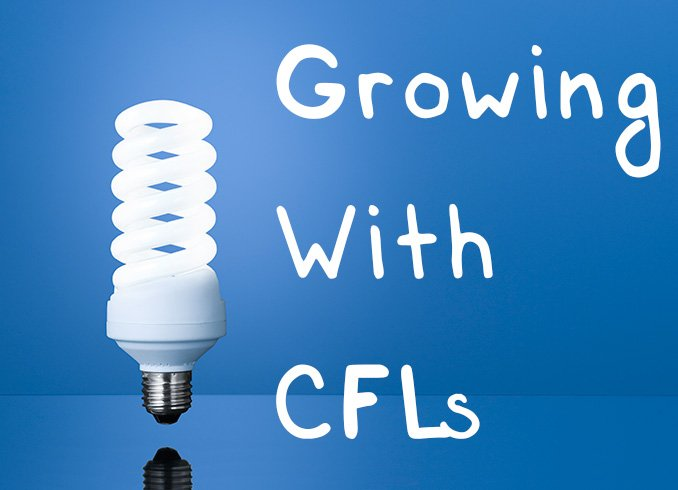 Growing With CFLs