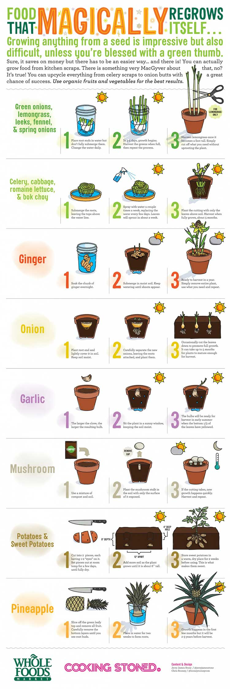 Regrow food from kitchen scraps
