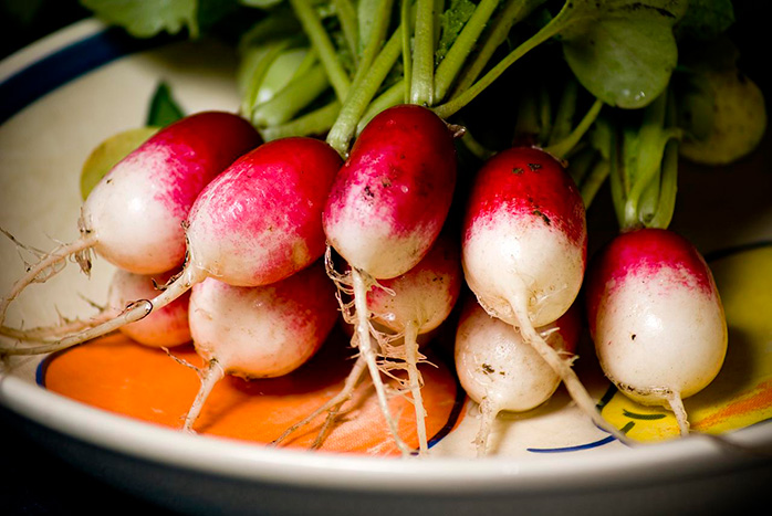 How fast do radishes grow?