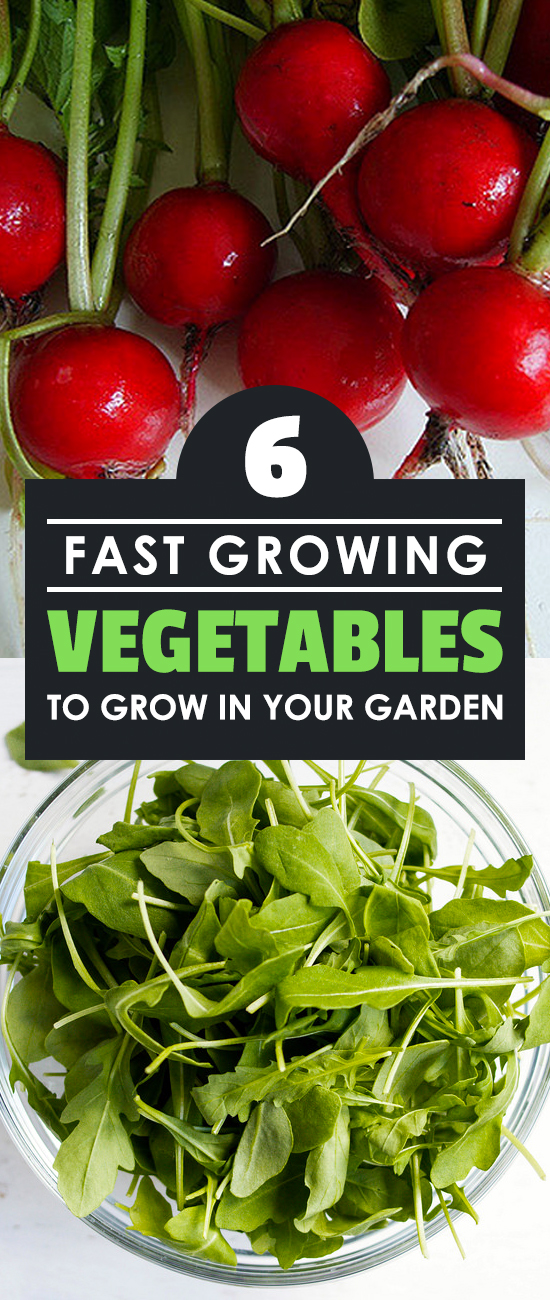 These six fast growing vegetables are a great way to have a consistent harvest, or ease your impatience if you want food on your table fast!