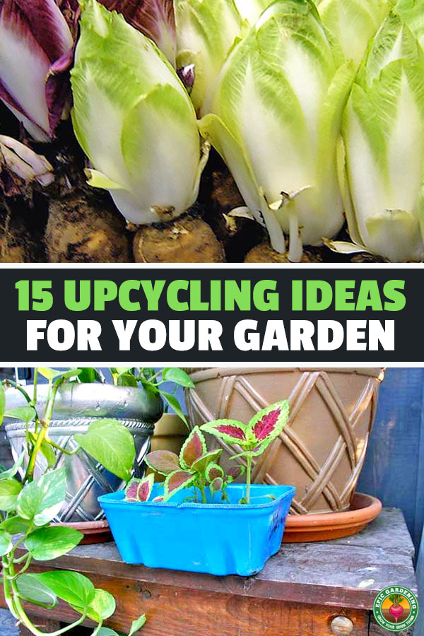 There are so many ways to use what you have lying around the house and upcycle for your garden. Learn the most popular in this article.