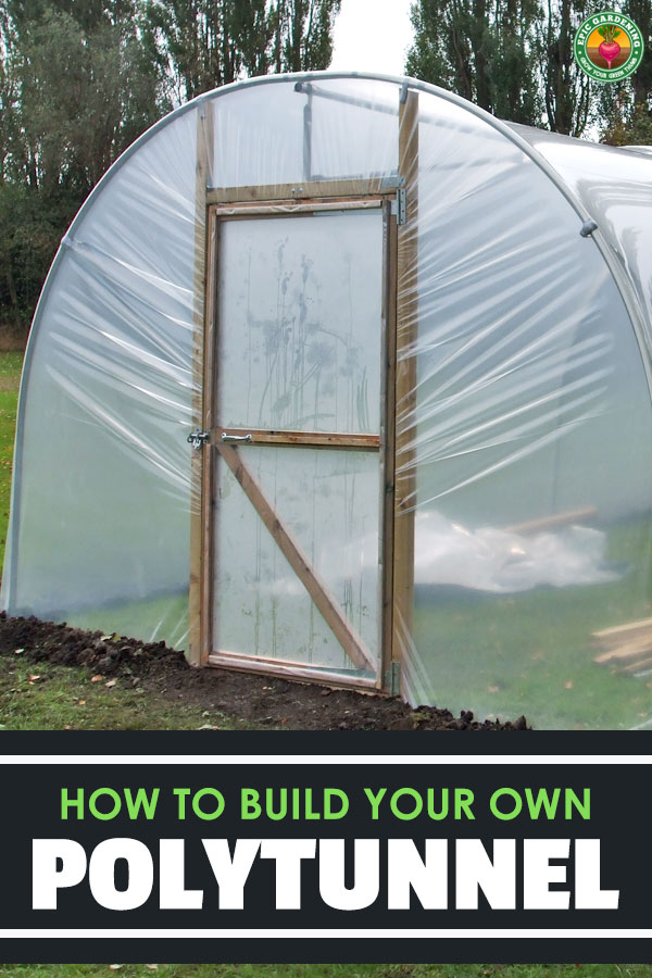 Building a polytunnel doesn't have to be hard. In fact, it's quite easy and adds a layer of protection to your garden. Learn how to build a poly tunnel here.