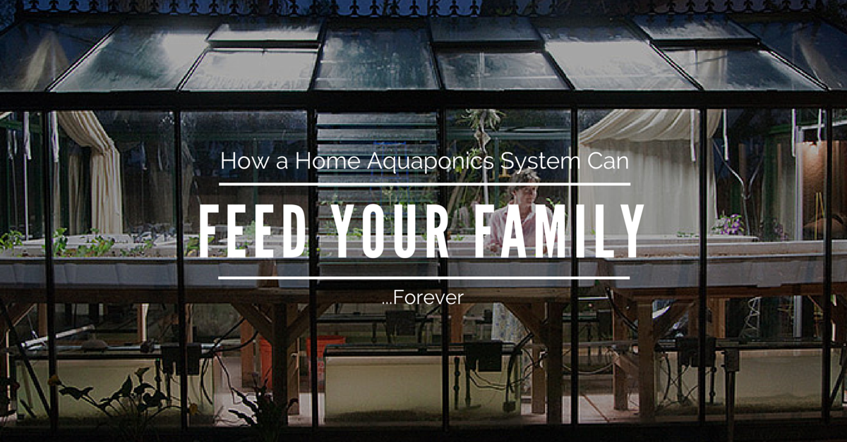 How A Home Aquaponics System Can Feed Your Family…Forever