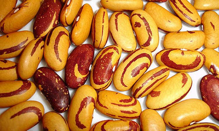 Ojo de Tigre beans