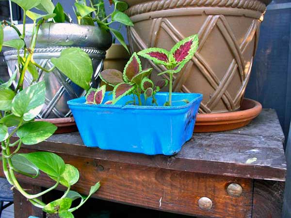 Turn Mushroom Containers Into Planters