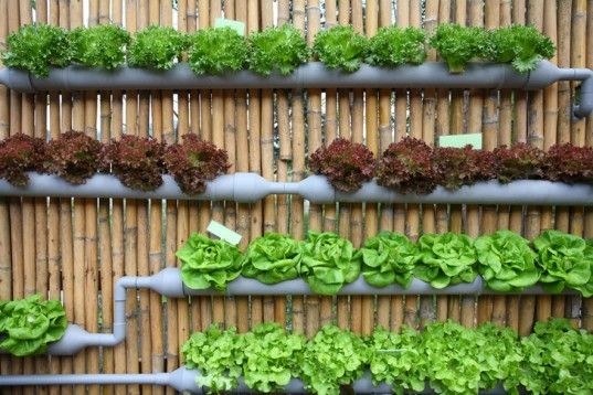 5 Creative Vegetable Garden Ideas Epic Gardening