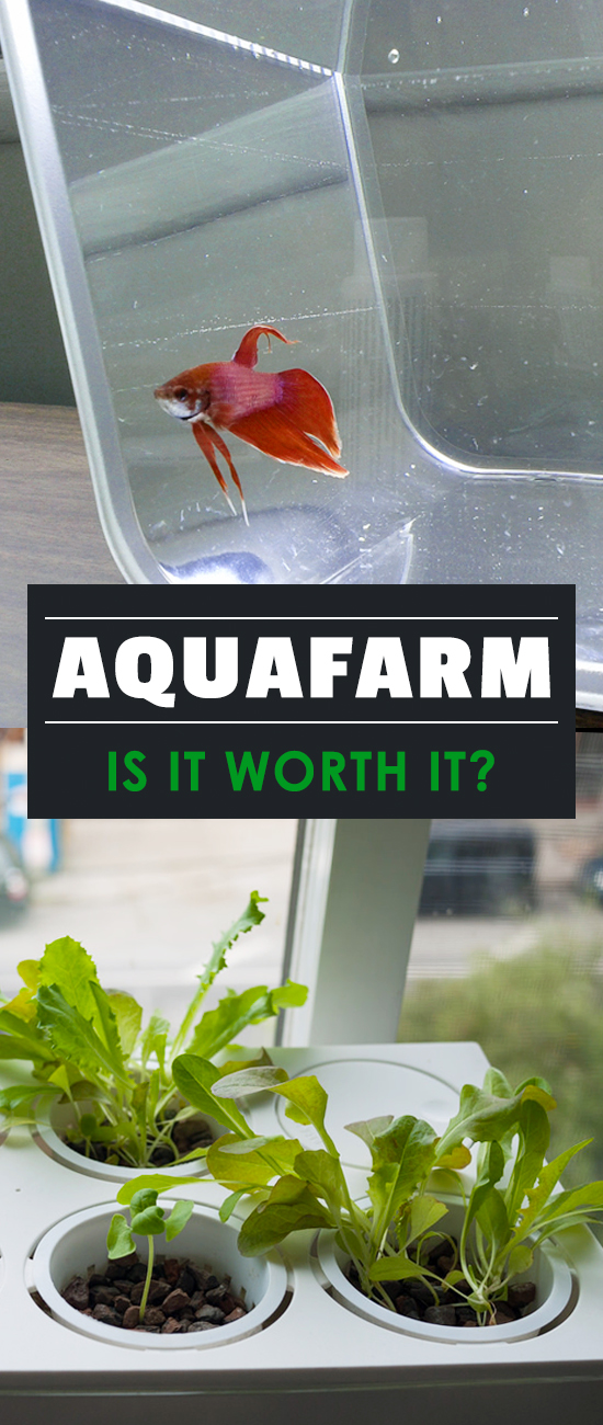 An AquaFarm review that covers what's in the package, how well it works for growing, and any problems that we ran into while using the product!