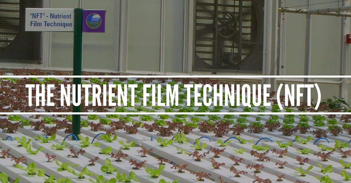Nutrient Film Technique (NFT) System