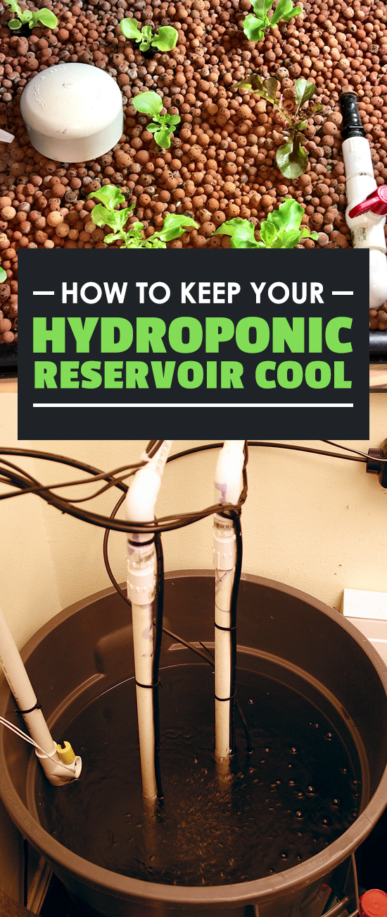 Learning how to keep your hydroponic reservoir cool will save you a lot of trouble, and possibly your entire grow itself. There are a few ways to keep cool...