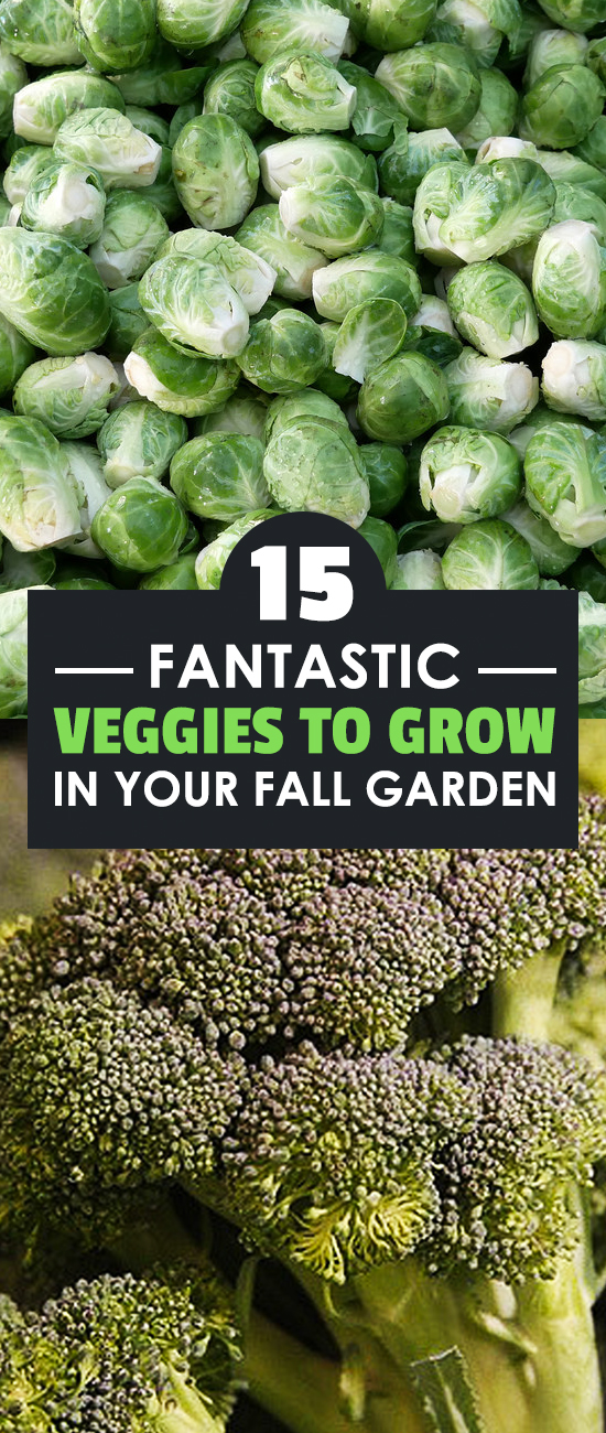 What To Plant In A Fall Garden - 15 Best Options