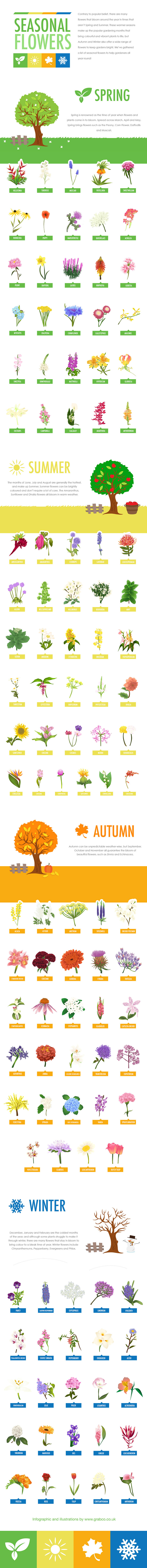 Seasonal Flowers Guide