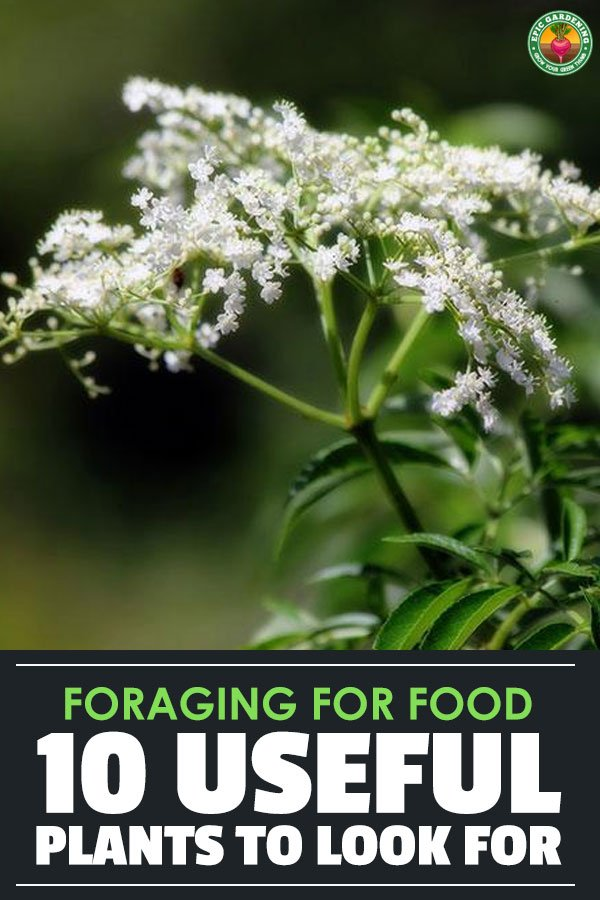 Foraging for food can be a lot of fun...if you know what you\'re looking for. Forage for these ten plants and add them to your diet!