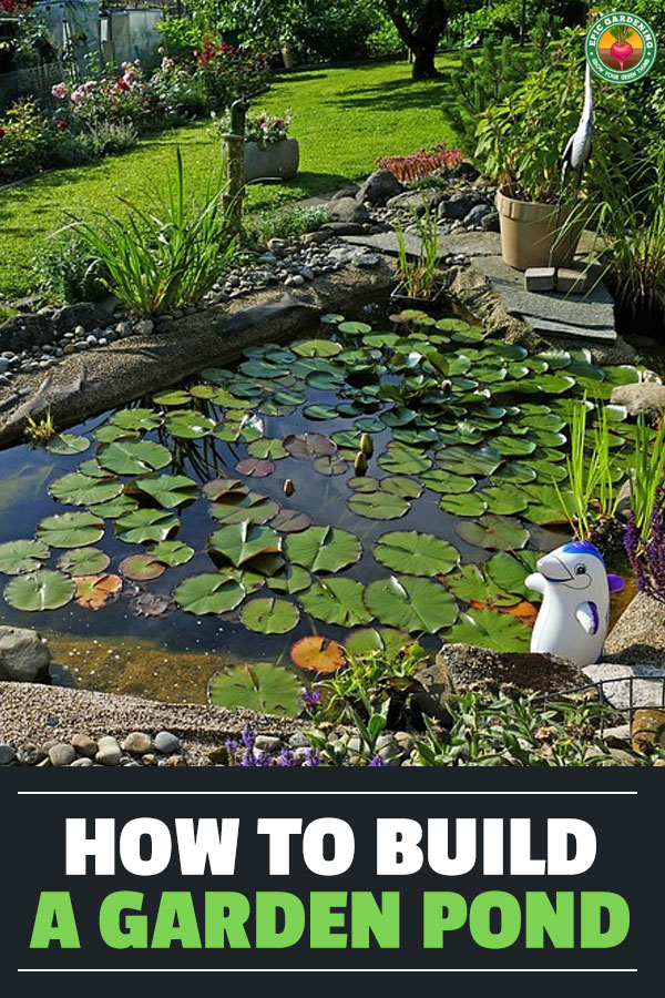 Learn how to build a garden pond in this simple step by step guide. Add some water to your garden that attracts all sorts of friendly creatures in!