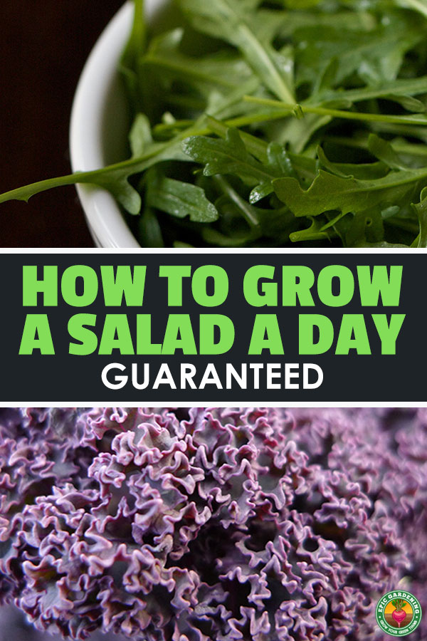 Learning how to grow salad greens that are less common will add flavor and nutrition to salads that might otherwise become bland and unfulfilling.