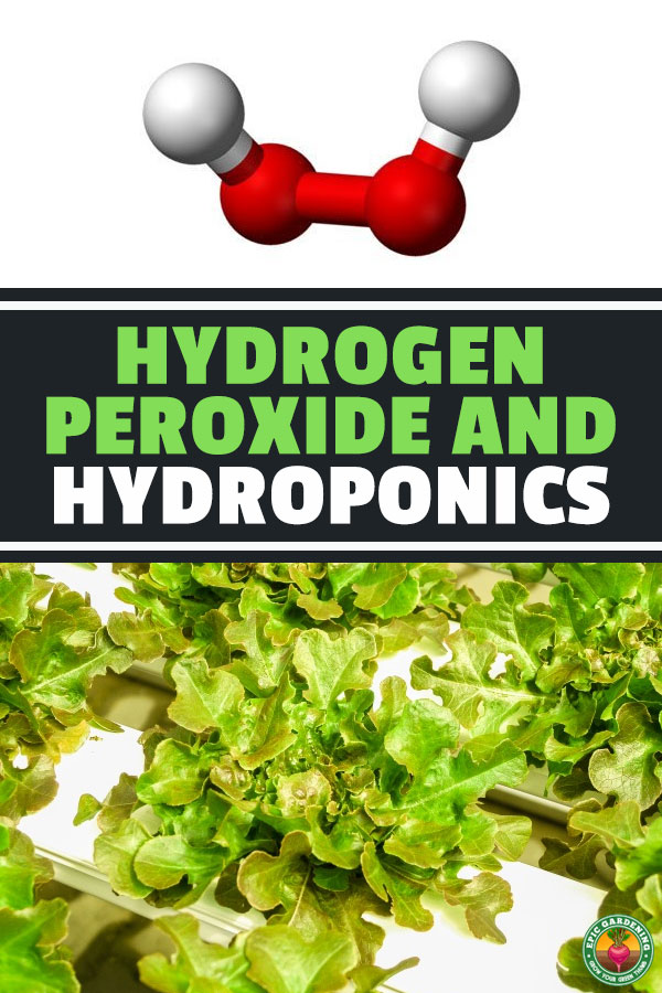 H2O2 in hydroponics is an often overlooked tool. Hydrogen peroxide helps disinfect and sterilize your system and has a wealth of other benefits as well.