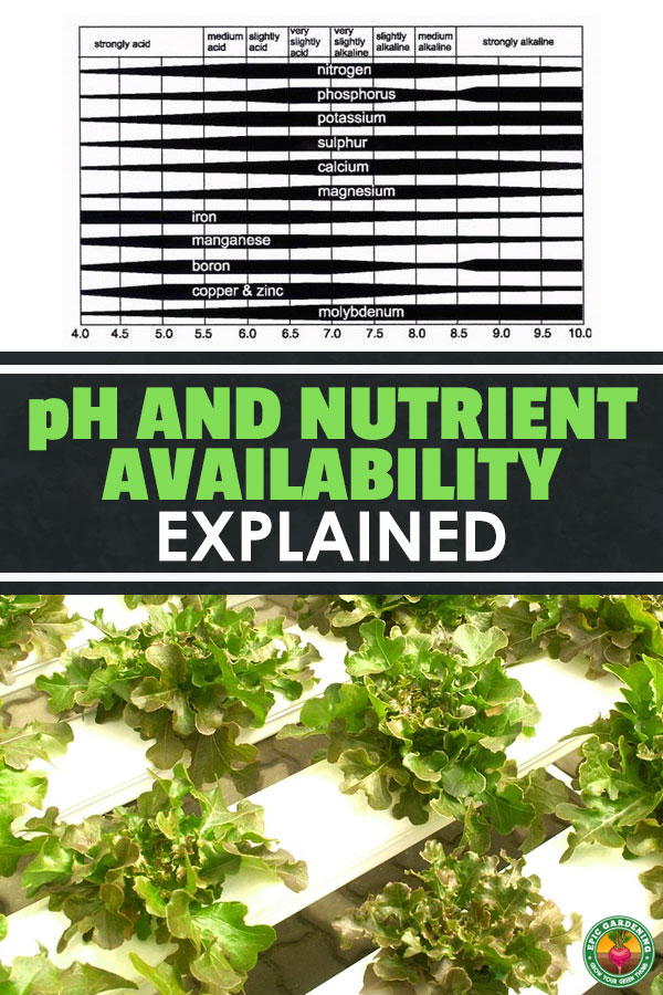 Avoid nutrient lockout by reading this guide on pH and nutrient availability for hydroponics. Learn to grow food fast and cheap at home!