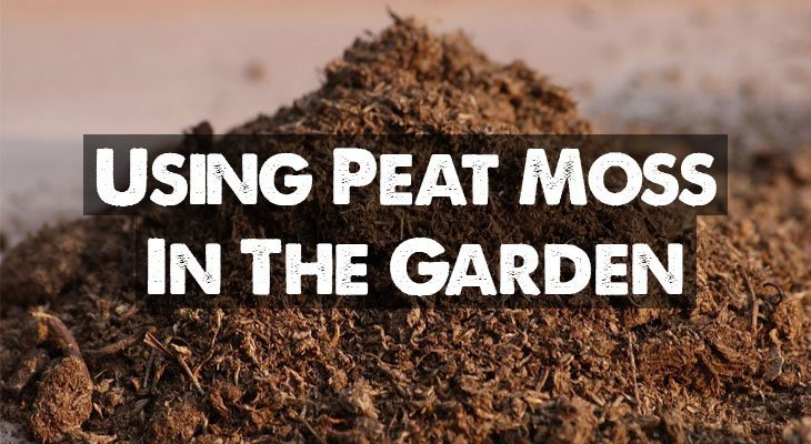 Peat Moss Our Guide On Using Sphagnum Peat In Your Garden