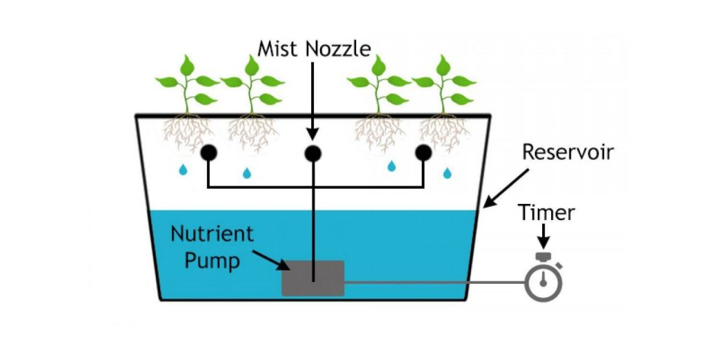 Hydroponic Systems: How They Work and How To Build Your Own
