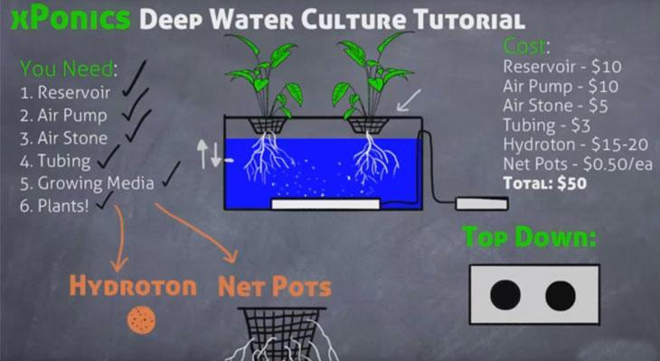 Deep Water Culture (DWC): What Is It And How To Get Started