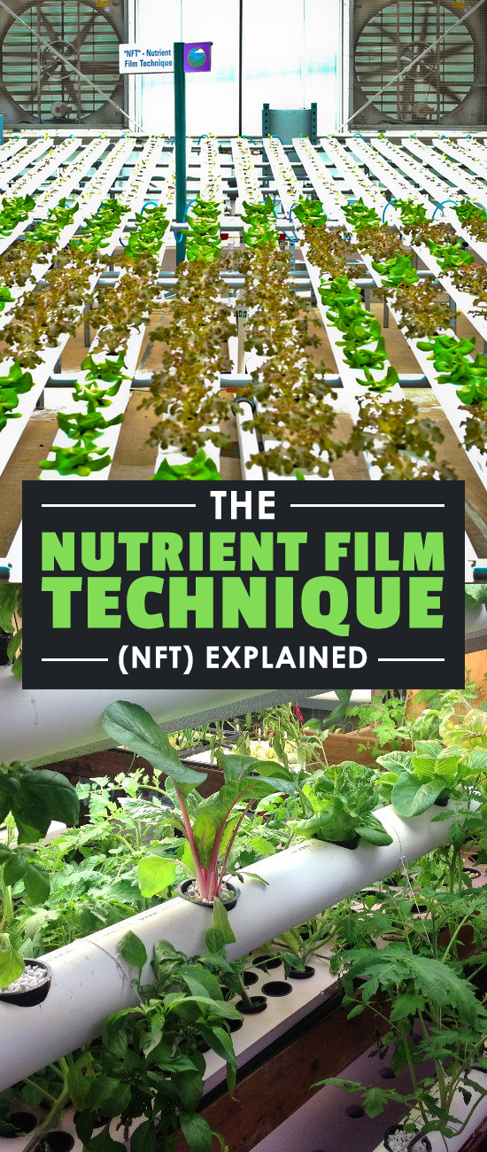 The nutrient film technique is a popular hydroponic system design. NFT systems provide a lot of flexibility that other methods do not. Learn more here.