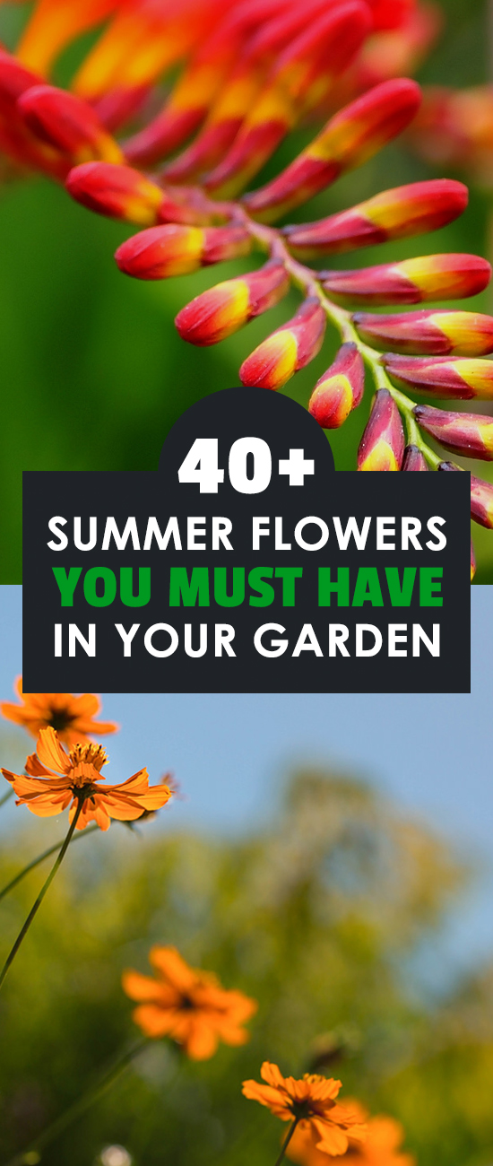 40 summer flowers you must have in your garden learn how to grow perennial flowers that bloom all summer including summer flower images and mightylinksfo