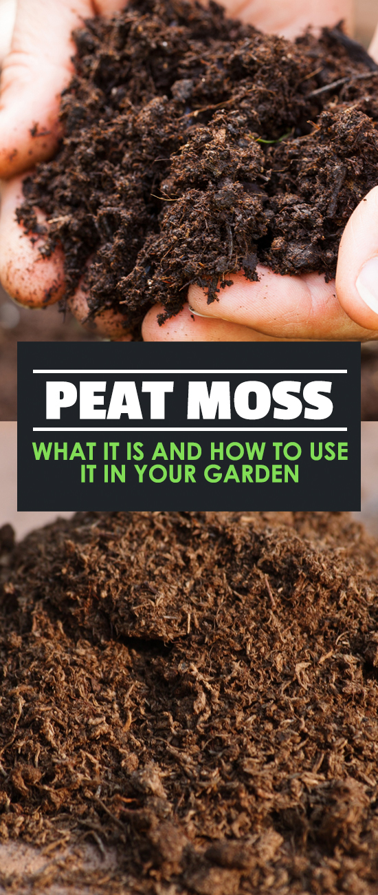 Peat moss what it is and how to use it in your garden for Garden soil definition