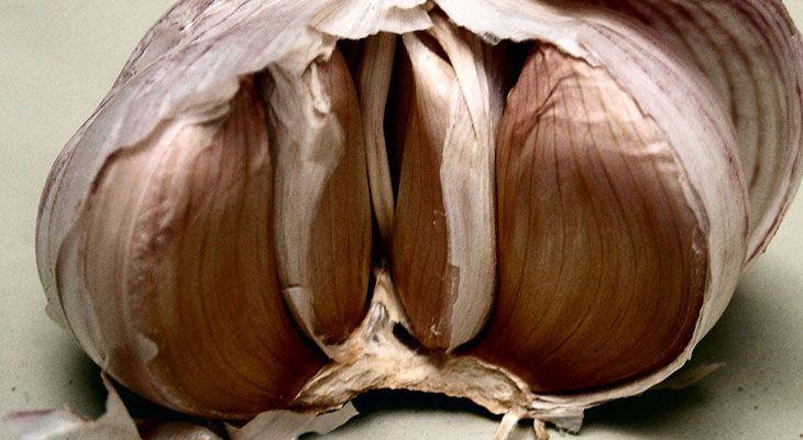August Garlic