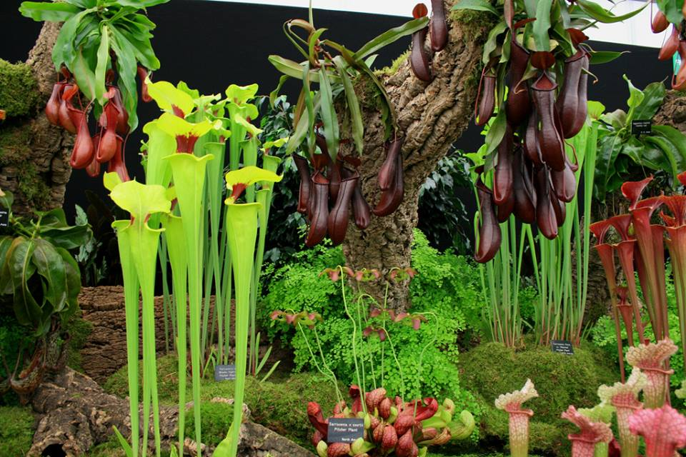 700+ Species of Carnivorous Plants