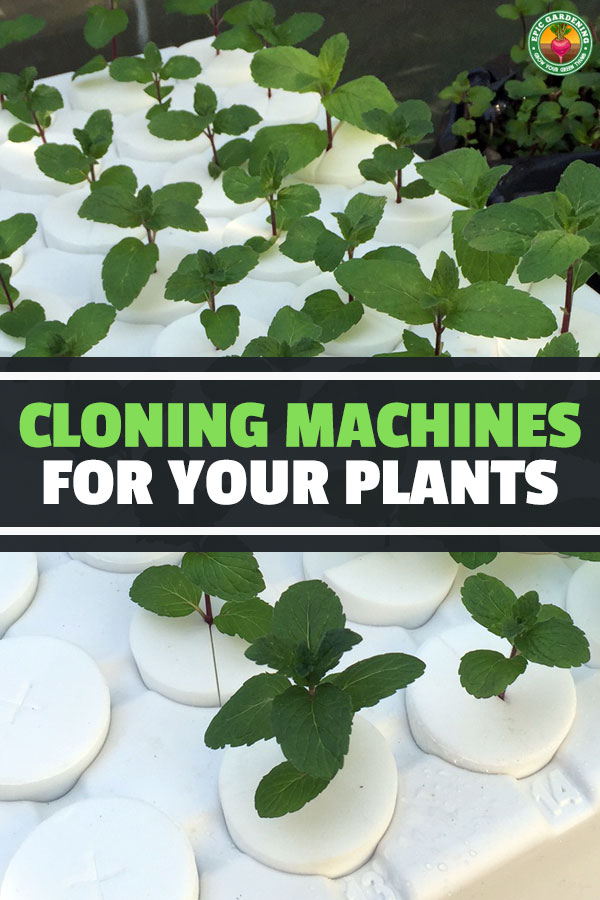 Plant cloning machines make propagation much easier, and the best ones make it an absolute breeze. After testing five, here are the best plant cloners.