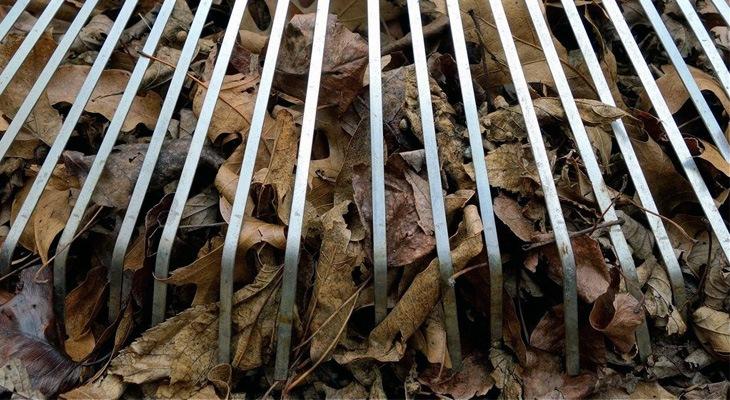 The Best Leaf Rake