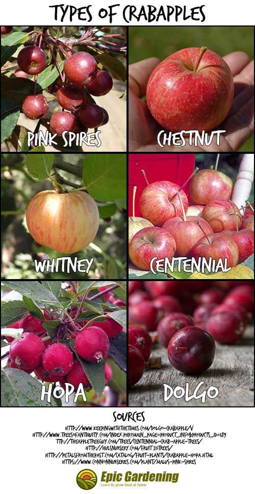 Types of Crabapples