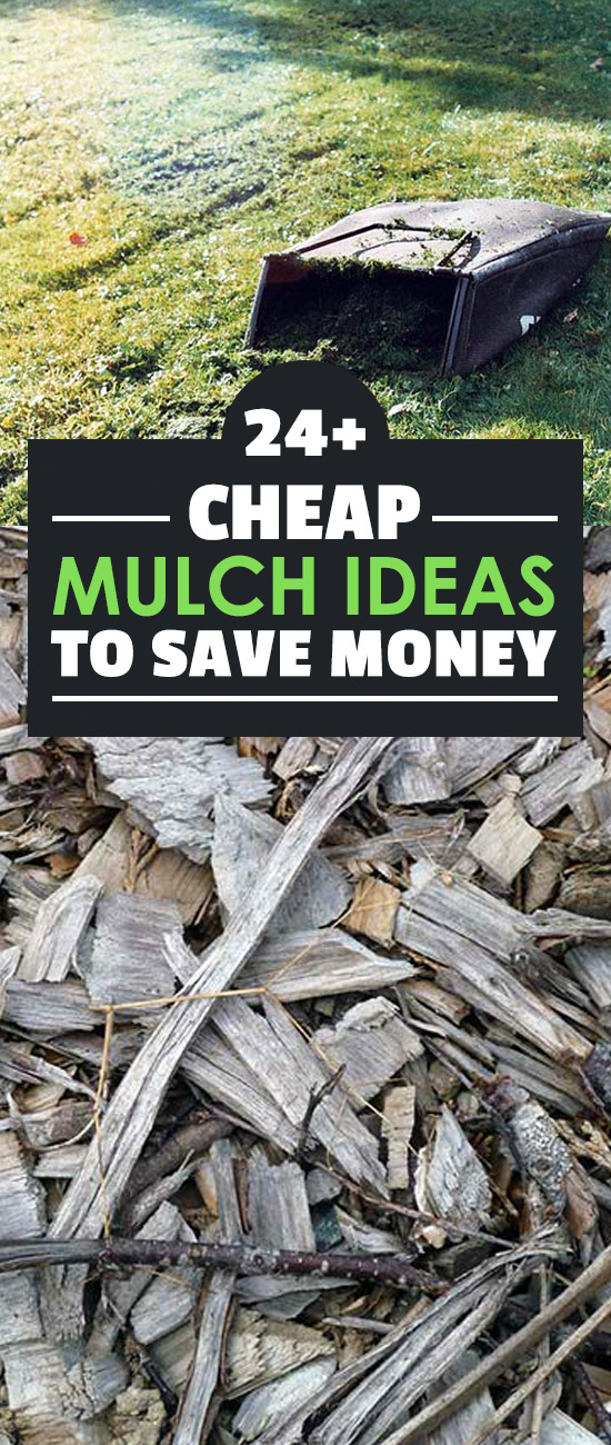 Mulch can get expensive, especially if you buy from a garden center. These 24 cheap mulch ideas will save you a ton of money and are really easy to do!