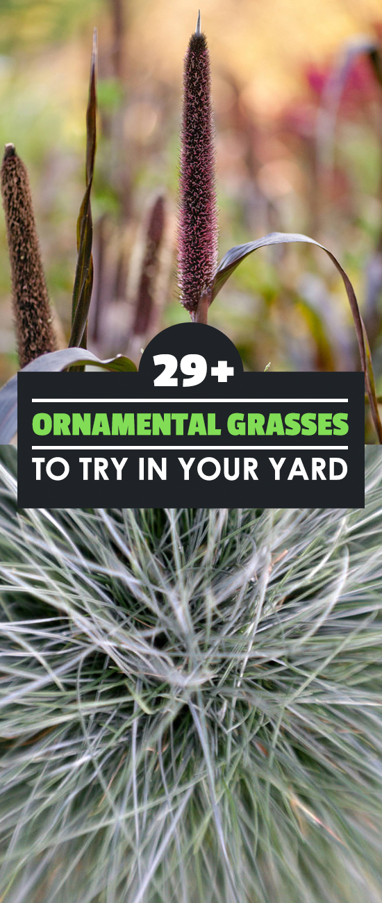 Ornamental grasses come in many shapes and sizes, and make a wonderful addition to your garden or landscaping. Learn the most popular types and how to grow them.