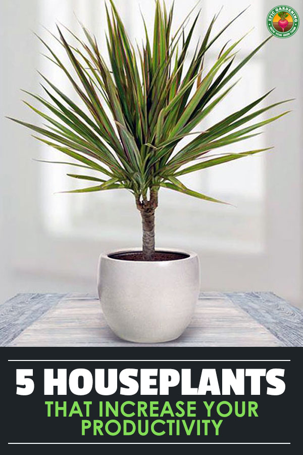 Are you looking to be more productive at your home office or workplace?
