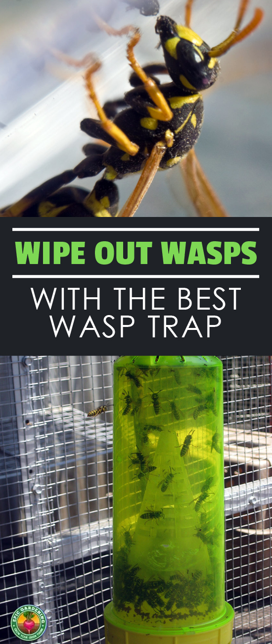 Are you having a war with wasps? If you've got wasp problems, I'll show you how to pick the best wasp trap for your specific situation!